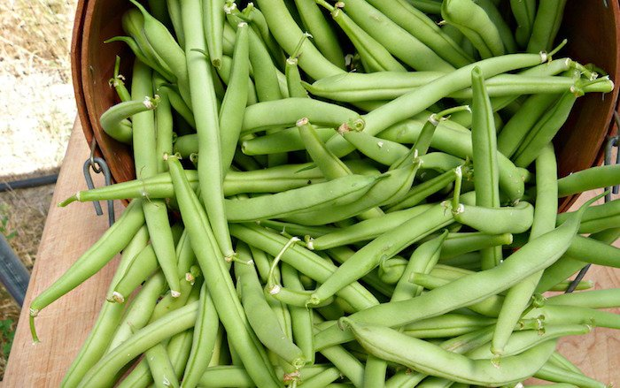 The 10 Easiest Vegetables to Grow from Seeds