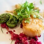 Fiddleheads and Savory Scallops