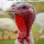 A Responsible Thanksgiving with Farm Sanctuary's Adopt a Turkey Project