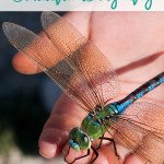 Guided Relaxation: Big Emotions & the Beautiful Dragonfly