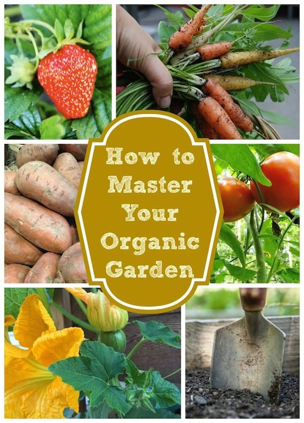 It may seem difficult, but organic gardening will quickly prove very rewarding. From getting outside to eating your own, home-grown vegetables, there's plenty to enjoy.