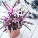 10 Indoor Plants That Can Be Dangerous to Kids and Pets