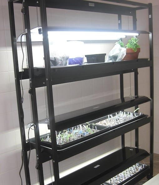 indoor light for plant seedlings
