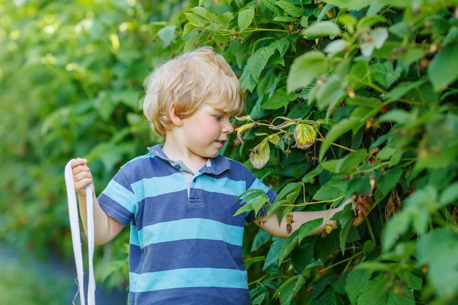 Growing Good Eaters: 5 Easy Vegetables to Grow With Kids