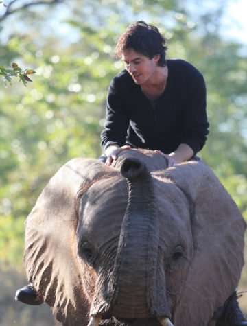 The more you know eco: Ian Somerhalder Foundation