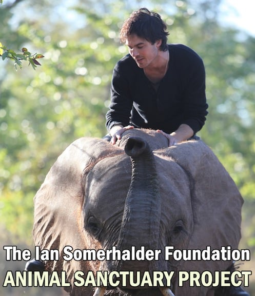 Ian Somerhalder Foundation Animal Sanctuary