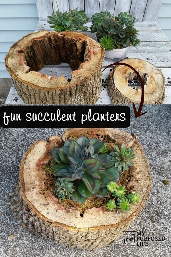 Creative repurposed planters from tree stumps