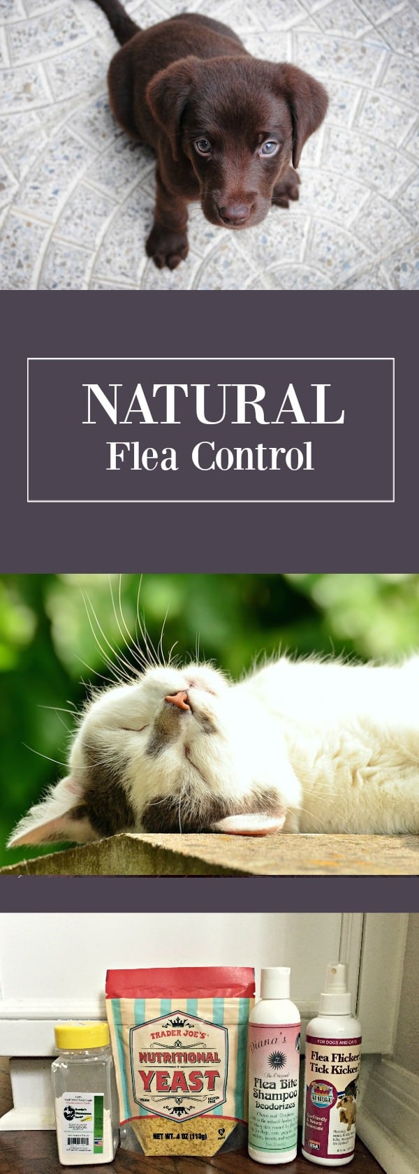 With a little bit of patience and touch of diligence, you can successfully prevent fleas naturally