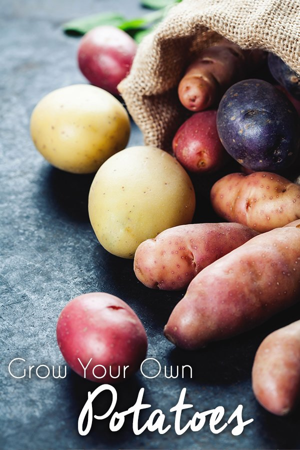 Grow Your Own Potatoes in Containers