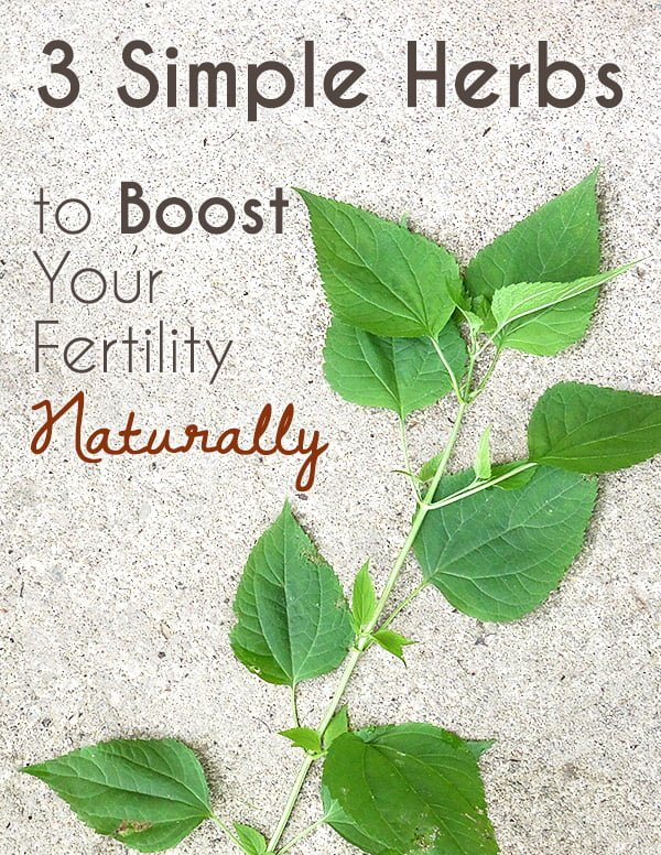 3 Herbs for Fertility to Help Boost Your Odds for Getting