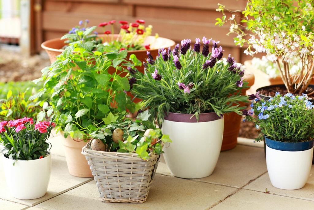 container gardening benefits