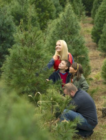 Family on Christmas tree farm