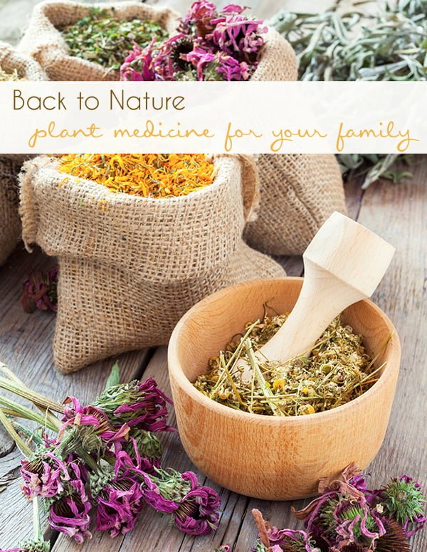 Back to Nature: Plant Medicine for Your Family