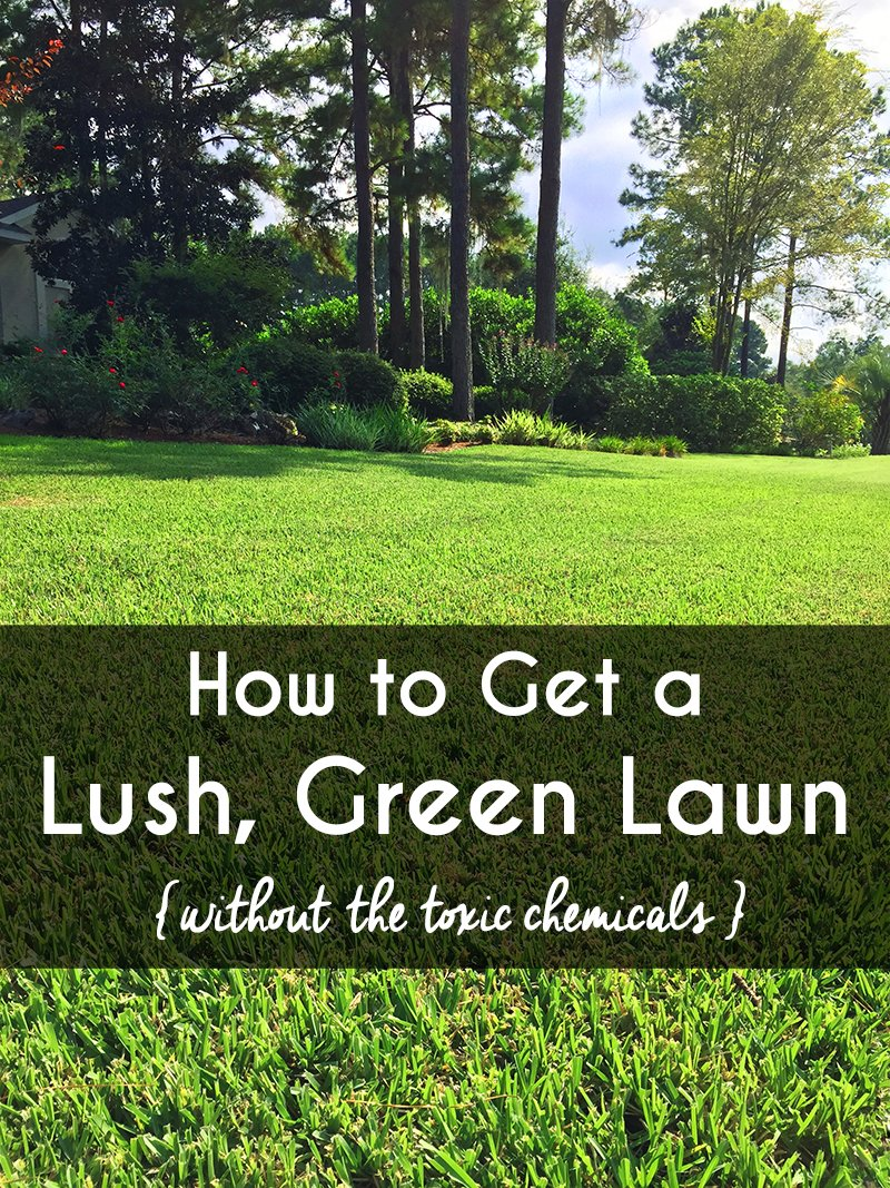 How To Get A Lush Green Lawn Without The Toxic Chemicals We All Want