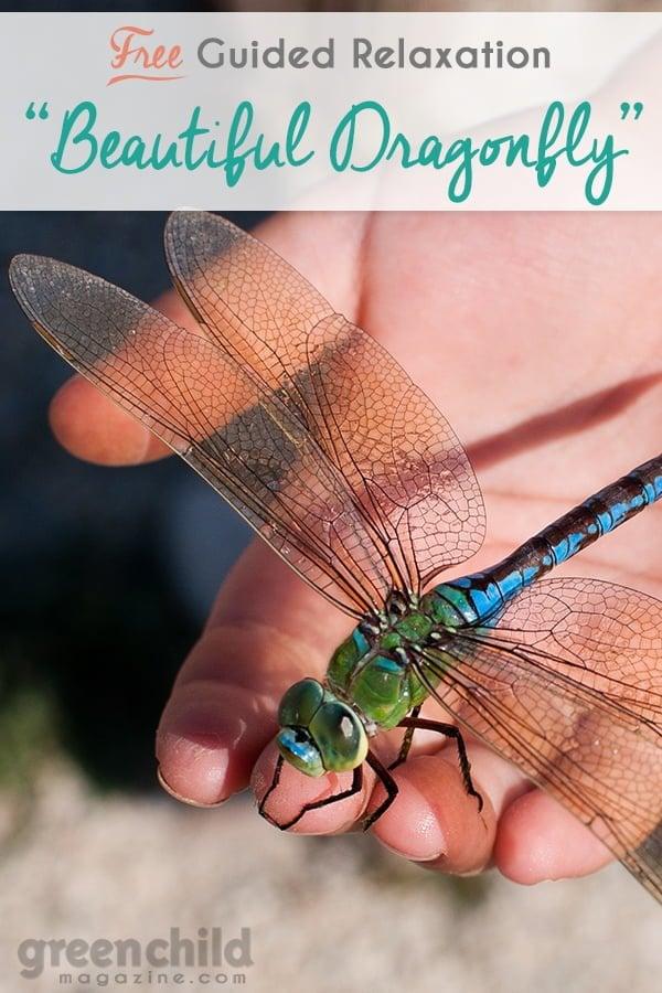 Big Emotions & the Beautiful Dragonfly - Guided meditation script