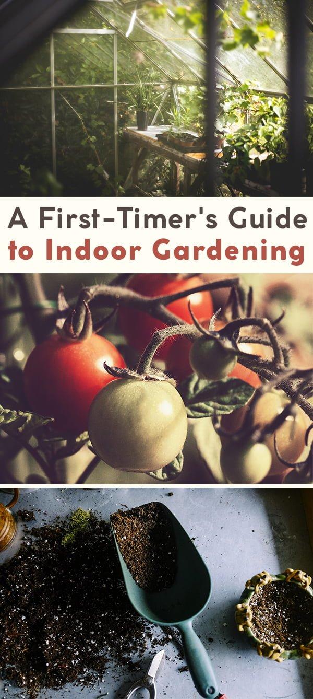 Guide to Indoor Gardening