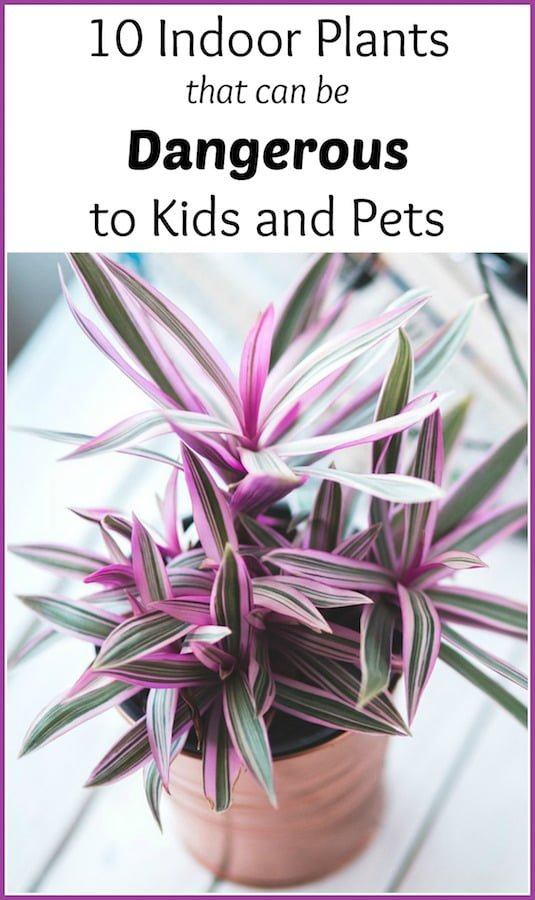 Indoor Plants that can be harmful to kids & pets