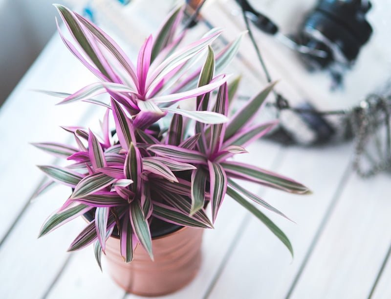 10 Indoor Plants that can be Harmful to Kids or Pets