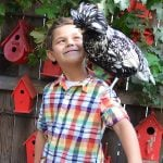 Children and Chickens: What Backyard Chickens Can Teach Kids
