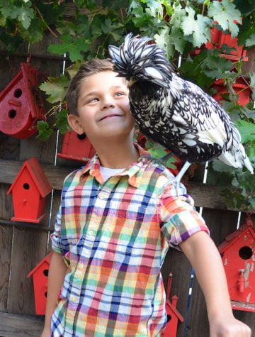 Children & Chickens: What backyard chickens can teach kids
