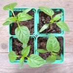 Everything You Need to Know to Make an Indoor Veggie Garden (and Actually Grow Something)