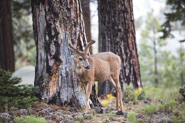 Camping and Wildlife: How to Safely Observe Animals in their Natural Habitat