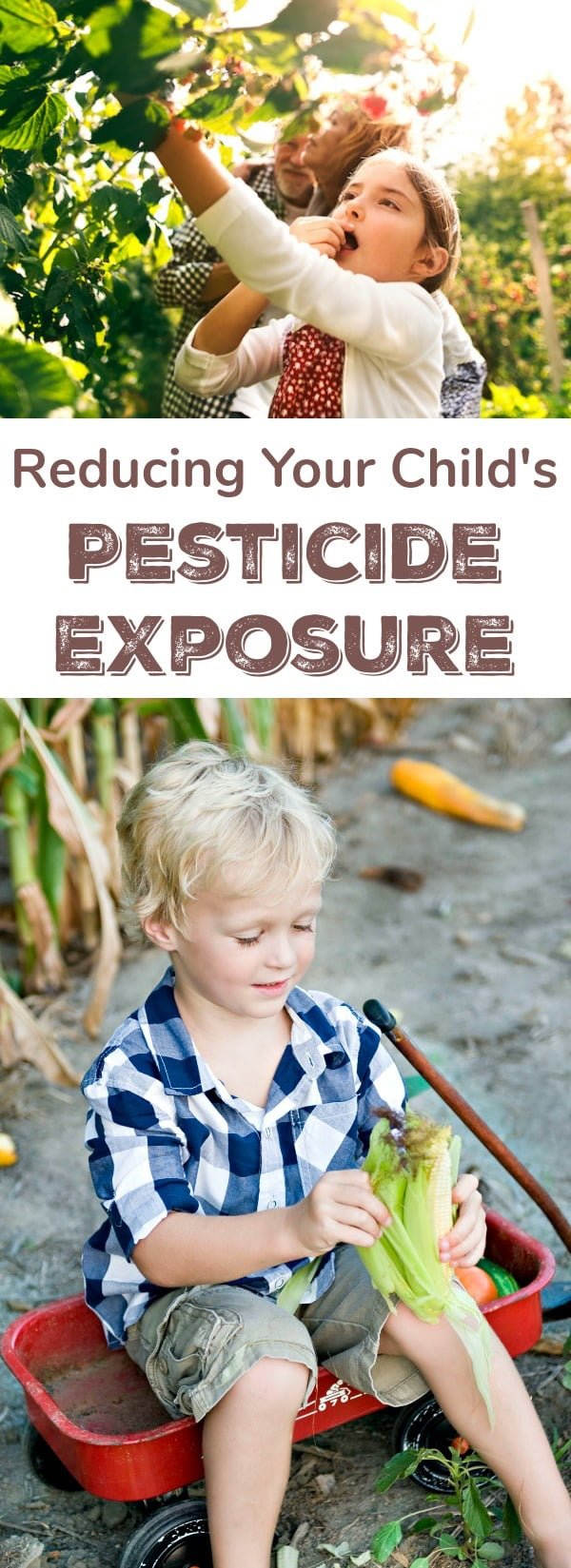How You Can Protect Your Child From Pesticide Exposure: There are many serious health risks associated with exposure to pesticides in children. Some effects can inhibit learning, including ADHD and decreased IQ. Major risks also include cancer, depression, breathing problems, and a compromised immune system.
