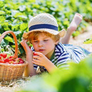 Kid-friendly gardening projects