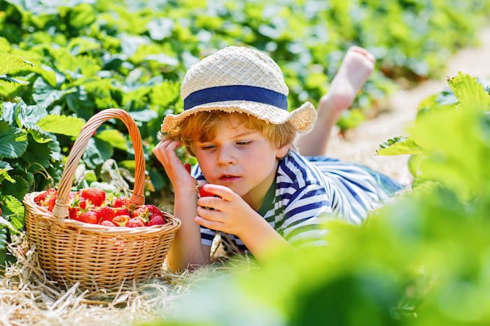 Are you looking for creative ways to get your kids outside the house and off those devices? Maybe you're struggling to encourage your kids to eat healthy? Kid-friendly garden projects can accomplish both... and then some.