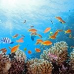 How Sunscreens Are Damaging Coral Reefs