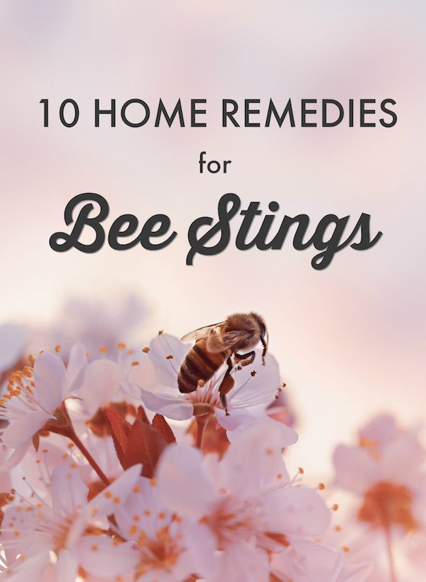 10 Home Remedies for Bee & Wasp Stings