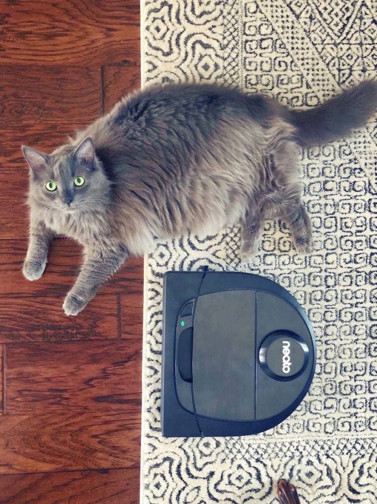 Allergy Relief - Reducing Pet Dander in Your Home