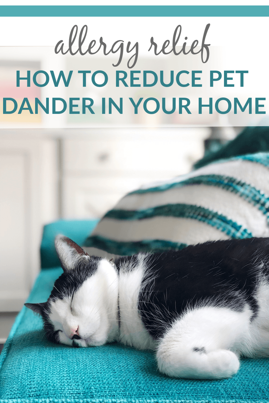 Allergy Relief How To Reduce Pet Dander In Your Home