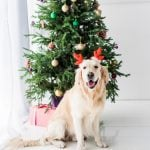 Green Gifts for Pets