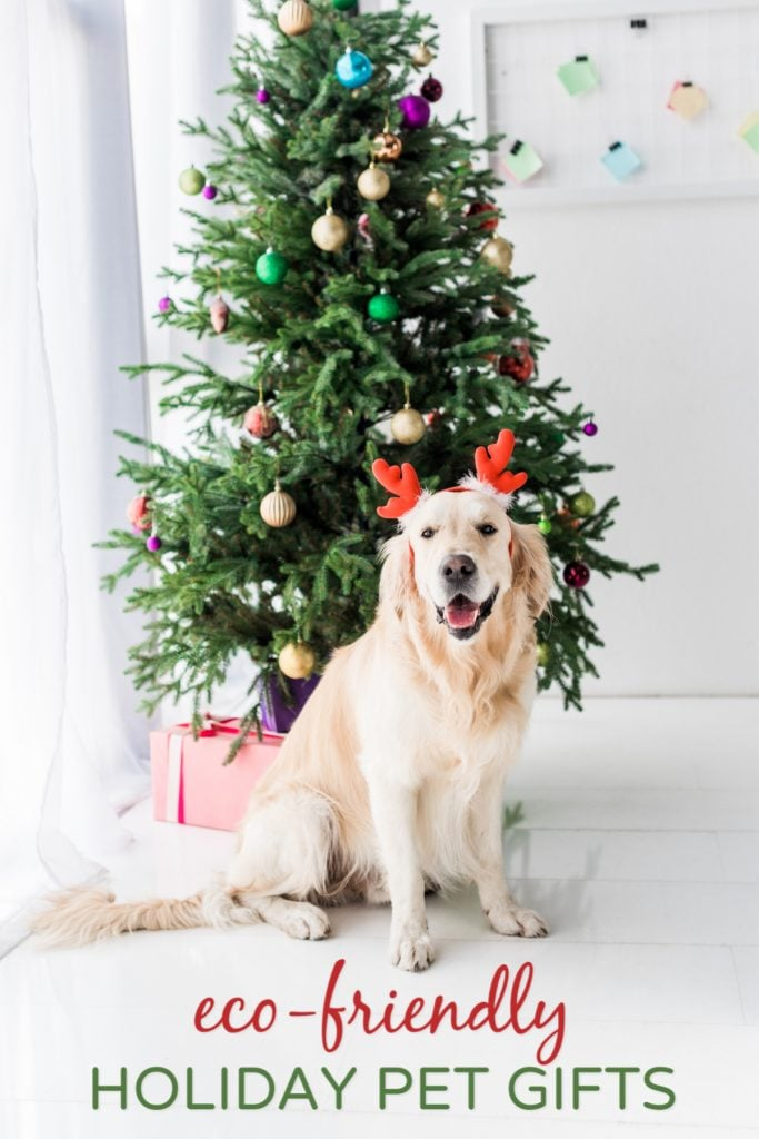 Green Gifts for Pets Dog in front of Christmas Tree