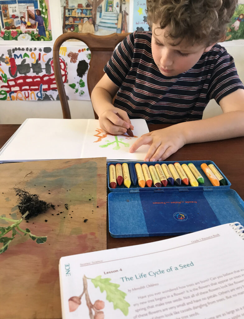 homeschool child using Oak Meadow curriculum